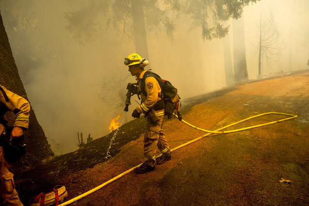 A firefighter carries a hose while battling the King Fire near Fresh Pond, California September 16, 2014. (Photo by Noah Berger/Reuters)