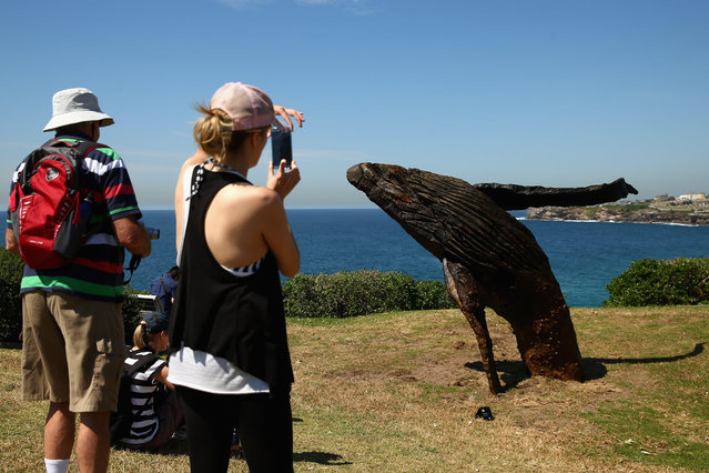 "People photograph ""Breaching"" by Michael Greve during the 2014 Sculptures by the Sea exhibition at Marks Park on October 23, 2014 in Sydney, Australia. (Photo by Cameron Spencer/Getty Images)"