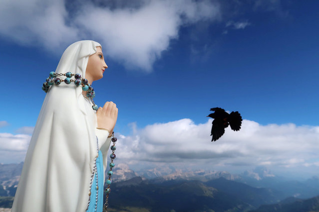 A mountain jackdaw flies past a little praying Madonna statue on top of the Piz Boe mountain in the Dolomites Alpine region near Arabba, Italy, September 8, 2016. (Photo by Wolfgang Rattay/Reuters)