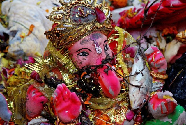 A dead fish lies on an idol of Hindu god Ganesh, the deity of prosperity, in a polluted pond a day after the immersion of idols of Ganesh, in Ajmer, India September 16, 2016. (Photo by Himanshu Sharma/Reuters)