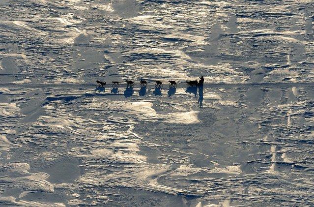 A musher drives a dog team towards the Koyuk checkpoint in Alaska during the Iditarod Trail Sled Dog Race, on March 11, 2013. (Photo by Bill Roth/The Anchorage Daily News)