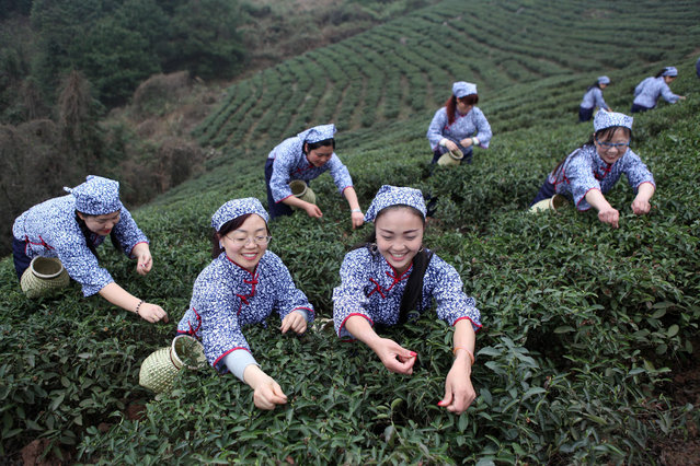 Chinese women compete in tea leaf picking contest to celebrate the coming International Women's Day in Bao Feng town, Yongchuan District, China, 06 March 2018 (issued 08 March 2018).  International Women's Day is celebrated annually on 08 March. (Photo by Chen Shichuan/EPA/EFE)