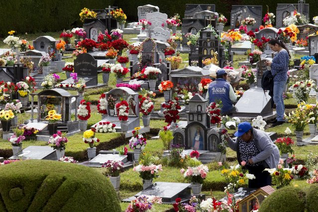 People clean graves at a cemetery, known for its topiary art, during the observance of the Day of the Dead, in Tulcan, Ecuador November 2, 2015. (Photo by Guillermo Granja/Reuters)