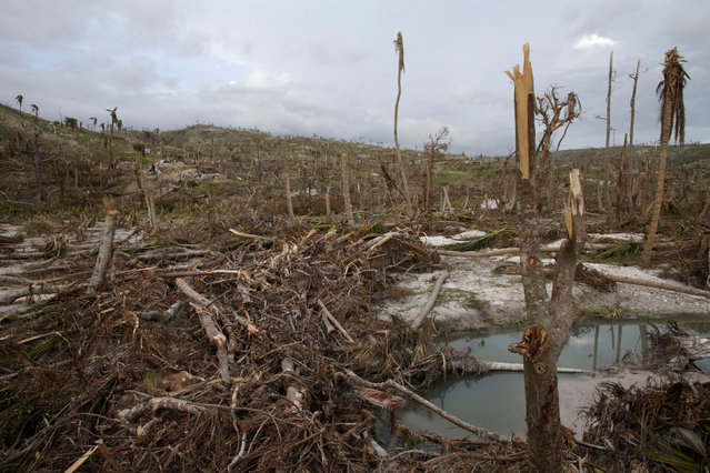 Trees downed by Hurricane Matthew in Roche-a-Bateu, Haiti, October 10, 2016. (Photo by Andres Martinez Casares/Reuters)