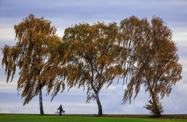 In this Wednesday, October 21, 2015 photo a woman rides her bicycle past autumnally colored trees near Kirchdorf on the island of Poel in the Baltic Sea, northern Germany. (Photo by Jens Buettner/DPA via AP Photo)
