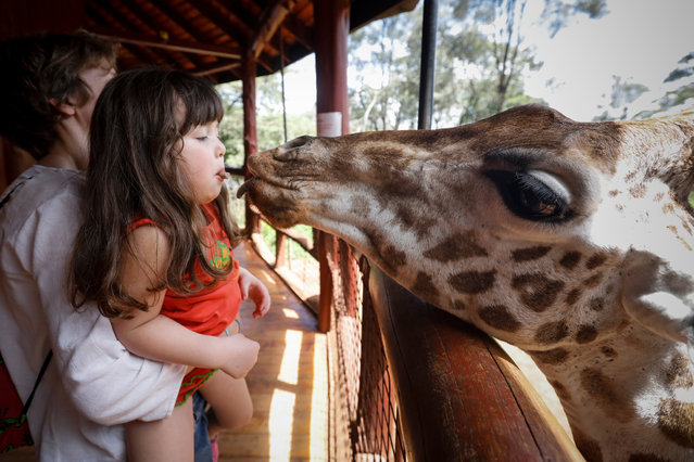 A young girl feeds a Rothschild giraffe with her mouth at the Giraffe Centre in Langata, outside Nairobi, Kenya, 09 April 2018. The Giraffe Centre, formally named The African Fund for Endangered Wildlife Kenya, was originally founded by American conservationist Betty Leslie-Melville and her husband Jock in 1979 in a bid to protect Rothschild giraffes, one of the most endangered giraffe subspecies. The Centre aims to raise awareness on environmental issues and educate general public on the need to conserve Kenya's biodiversity. Today the Rothschild giraffe population only numbers about 500 animals. (Photo by Dai Kurokawa/EPA/EFE)