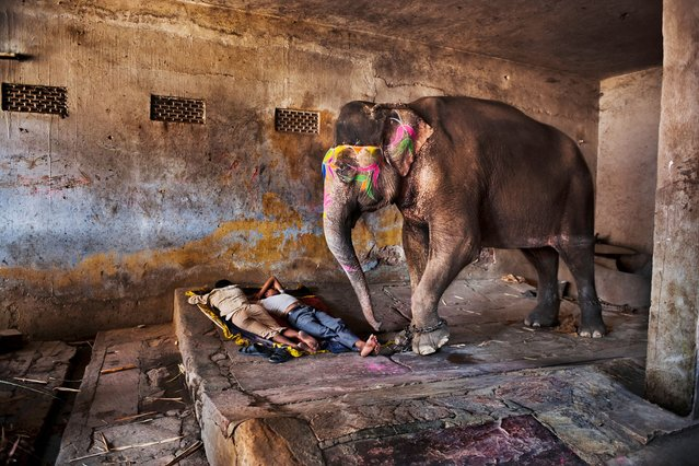 Mahouts sleep with their elephant. Rajasthan, 2012. (Photo by Steve McCurry)