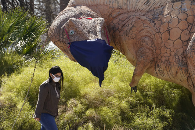 A woman wearing a face mask to protect against the spread of COVID-19 walks past a mask clad Acrocanthosaurus display at the Witte Museum, Thursday, January 28, 2021, in San Antonio. (Photo by Eric Gay/AP Photo)