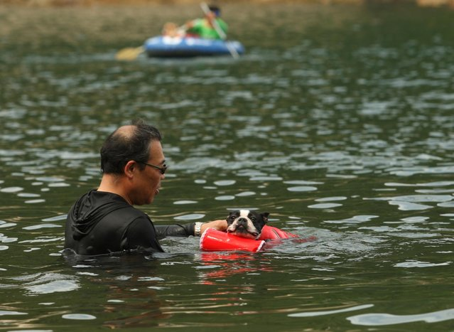 A man bathes his pet dog named Sora at Takeno Beach on August 4, 2013 in Toyooka, Japan. This beach is open for dogs and their owners every summer between the months of June and September. (Photo by Buddhika Weerasinghe/Getty Images)