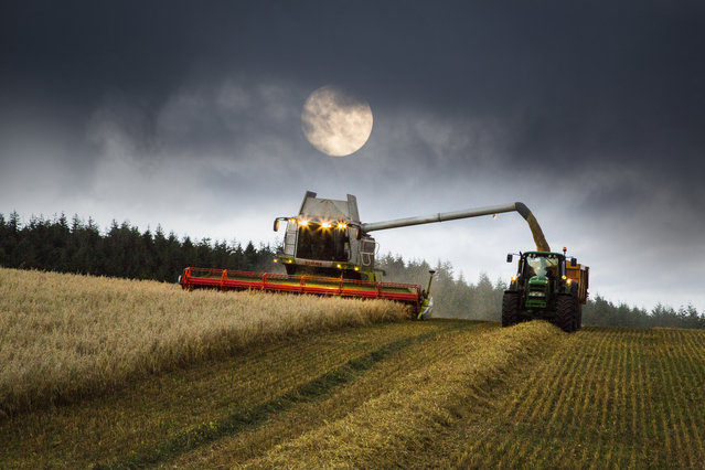 Harvest Moon. (Photo by Ralph Rayner)