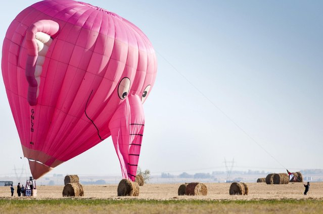 A pink elephant balloon, one of the entries in the Canadian Hot Air Balloon Championships, lands in a field in High River September 27, 2013. The event is a qualifier for the World Hot Air Balloon Championships in Sao Paulo in 2014. (Photo by Mike Sturk/Reuters)