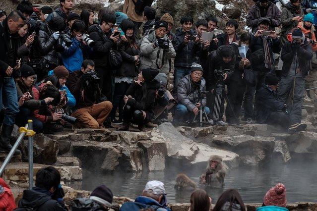 "In this photo taken on January 17, 2016, tourists surround Japanese wild monkeys known as ""snow monkeys"" in a hot spring at the Jigokudani Wild Monkey Park in Yamanouchi town, Nagano prefecture. (Photo by Yasuyoshi Chiba/AFP Photo)"
