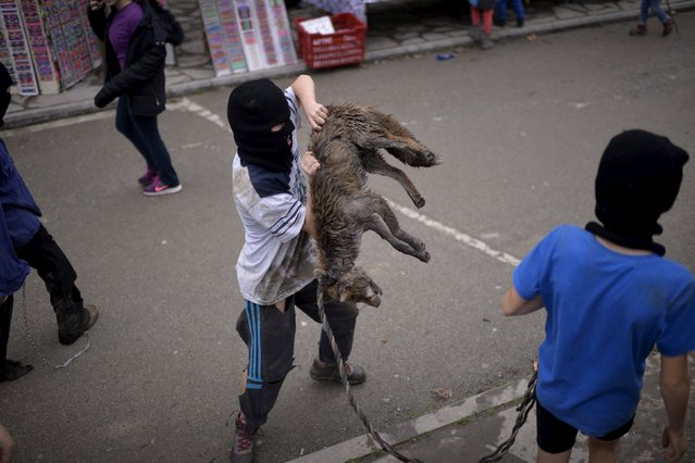 A boy carries a dead fox during carnival celebrations in Ituren February 1, 2016. (Photo by Vincent West/Reuters)