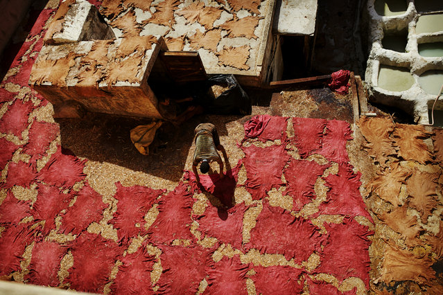 """""""Tan your hide"""". Fez, Morocco. A worker laying out dyed animal skins to dry at the Chouara tannery. (Photo by Natalia Ciobanu)"""