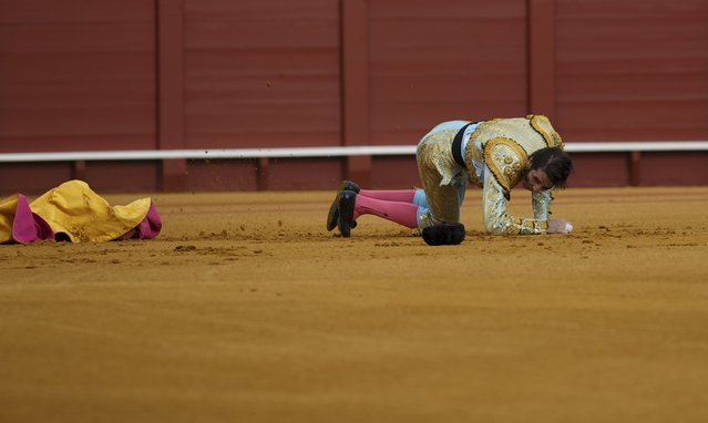 Spanish matador Juan Jose Padilla lies on the arena after being tackled by a bull during a bullfight at The Maestranza bullring in the Andalusian capital of Seville, southern Spain April 25, 2015. (Photo by Marcelo del Pozo/Reuters)