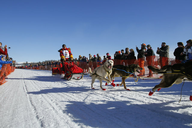 Mitch Seavey's team leaves the start chute at the restart of the Iditarod Trail Sled Dog Race in Willow, Alaska March 6, 2016. (Photo by Nathaniel Wilder/Reuters)