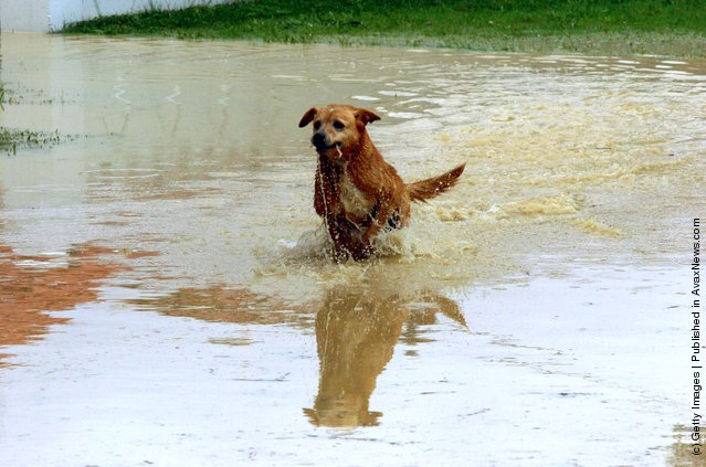 A dog makes the most of the flooded Waiwhetu stream on Riverside Drive