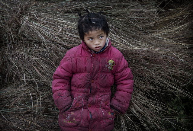 """""""Left behind"""" child  Luo Hongniu , 8, leans on hay bales while doing chores on December 18, 2016 in Anshun, China. (Photo by Kevin Frayer/Getty Images)"""