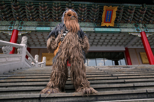 A man dressed as Chewbacca from Star Wars reacts during Star Wars Day in Taipei, Taiwan, May 4, 2016. (Photo by Tyrone Siu/Reuters)