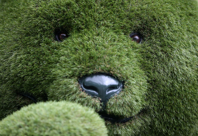 An artificial grass teddy bear is displayed at the RHS Chelsea Flower Show in London, Britain, May 21, 2017. (Photo by Neil Hall/Reuters)