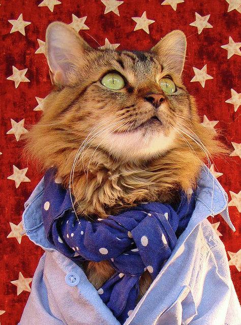 A Cat As Model By Joann Biondi