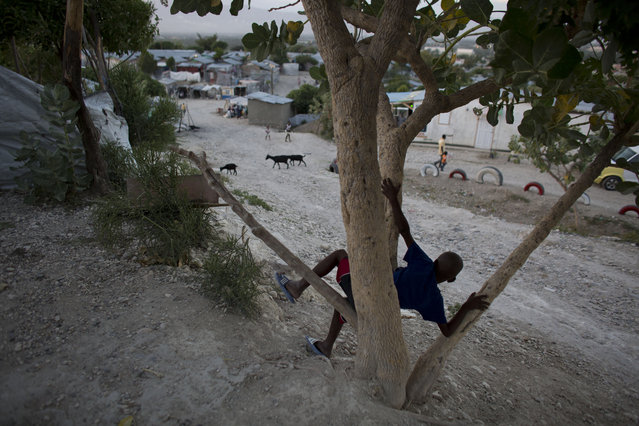 In this June 26, 2015 photo, a boy sits in a tree inside a tent camp set up for people displaced by the 2010 earthquake but that has turned into a longterm settlement in Port-au-Prince, Haiti.  According to the International Organization for Migration, nearly 65,000 people were still living in 66 camps as of March 31, 2015. (Photo by Rebecca Blackwell/AP Photo)