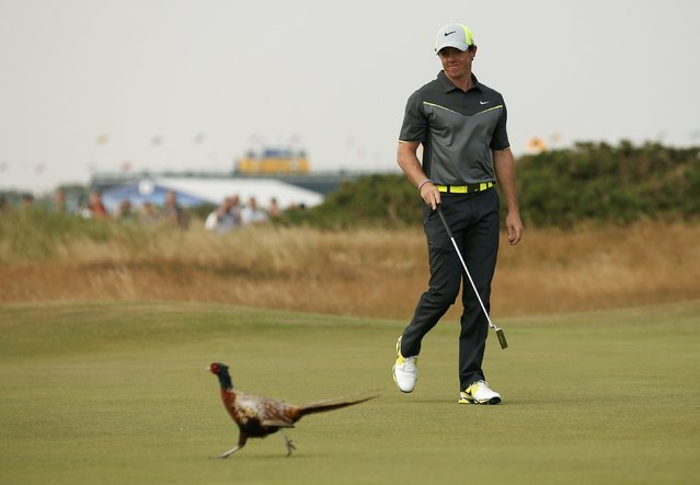 Rory McIlroy of Northern Ireland looks at a pheasant as it walks across the eighth green during the second round of the British Open Championship at the Royal Liverpool Golf Club in Hoylake, northern England July 18, 2014. (Photo by Cathal McNaughton/Reuters)