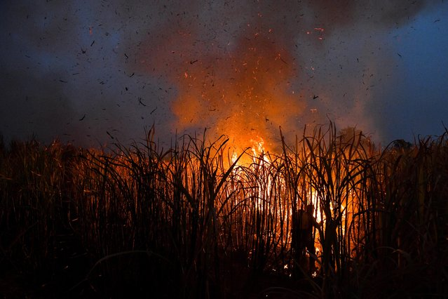 A farmer burns a sugar cane field at night as local growers try to avoid arrest by authorities who banned on the practice to curb smog in Suphan Buri province, north of Bangkok, Thailand, January 20, 2020. (Photo by Chalinee Thirasupa/Reuters)