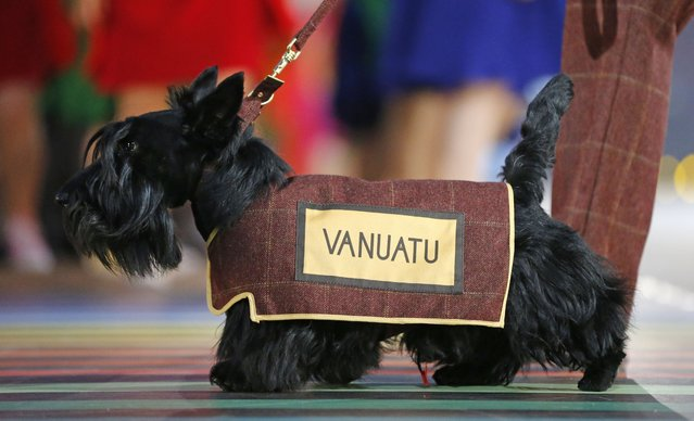 A Scottish Terrier wearing a vest with the team name of Vanuatu is led around the arena ahead of the team during the opening ceremony for the Commonwealth Games 2014 in Glasgow, Scotland, Wednesday July 23, 2014. (Photo by Frank Augstein/AP Photo)
