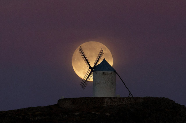 "A moon appears behind a windmill a day before the supermoon is full on September 8, 2014 in Consuegra, in Toledo province, Spain. Consuegra belongs to a region made famous by the novel ""Don Quijote de la Mancha"" (Don Quixote) writed by Miguel De Cervantes. Some of the windmills belong to the 16th century. (Photo by Pablo Blazquez Dominguez/Getty Images)"