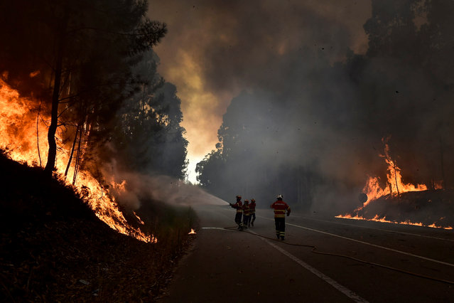 Firefighters battle flames during a forest fire in A-dos-Ferreiros, Agueda, Aveiro, Portugal, 08 August 2016. Ninety seven seven fire vehicles and two airplanes are working to fight the fire. (Photo by Nuno Andre Ferreira/EPA)