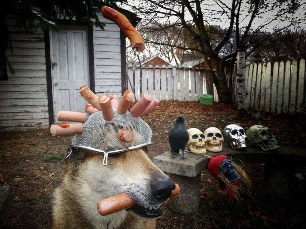 Balancing Dog