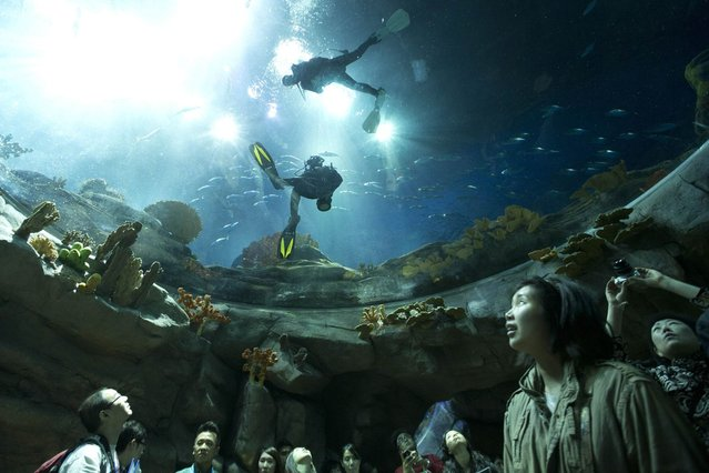 Visitors look at divers swimming in a giant aquarium at the marine-themed zone of Hong Kong Ocean Park April 11, 2013. Ocean Park launches its first programme to allow guests to dive into the Grand Aquarium under the close guidance of professional coaches. The aquarium is the world's ninth largest by volume, which features some 5000 marine animals of over 400 species. (Photo by Tyrone Siu/Reuters)