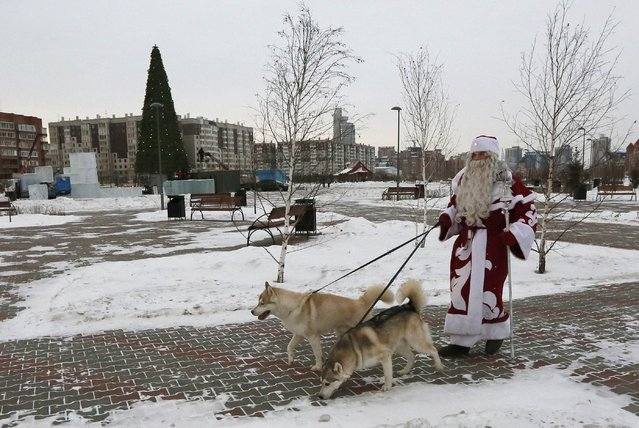 A man dressed as Father Frost walks with Siberian Huskies in a park during an annual Christmas Fair in Krasnoyarsk, Siberia, December 11, 2014. (Photo by Ilya Naymushin/Reuters)