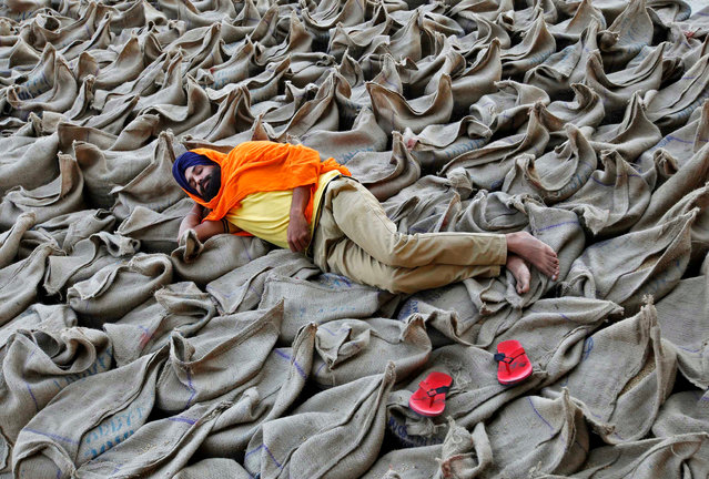 A farmer rests upon sacks filled with paddy at a wholesale grain market in Chandigarh, India, October 16, 2016. (Photo by Ajay Verma/Reuters)