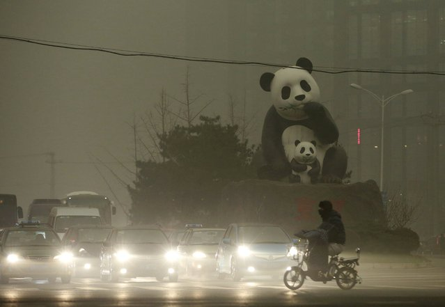 A resident rides an electric bicycleacross a street amid heavy smog as vehicles wait for a traffic light next to a statue of pandas, a landmark of the Wangjing area in Beijing, China, December 1, 2015. (Photo by Reuters/China Daily)