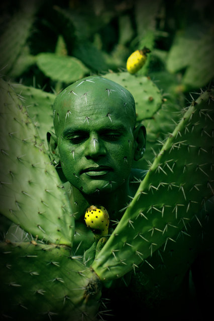 """Cactus"". (Photo by Johannes Stötter)"