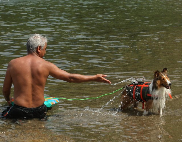 A man and his pet dog bathes in the water at Takeno Beach on August 4, 2013 in Toyooka, Japan. This beach is open for dogs and their owners every summer between the months of June and September. (Photo by Buddhika Weerasinghe/Getty Images)