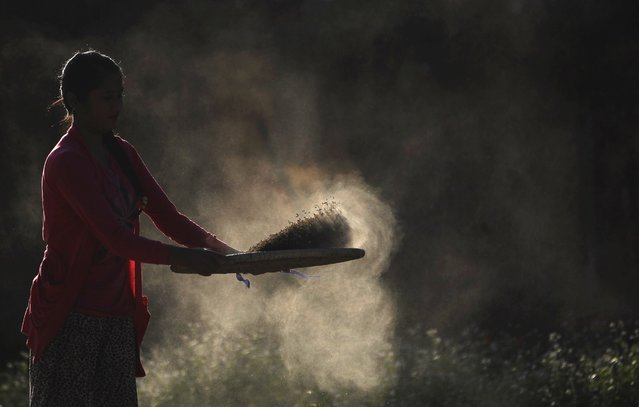A Nepalese village woman separates grain from chaff a after harvest in Chunnikhel on the outskirts of Kathmandu, Nepal, Thursday, October 20, 2016. Agriculture is the main source of food, income, and employment for the majority of people in Nepal. (Photo by Niranjan Shrestha/AP Photo)