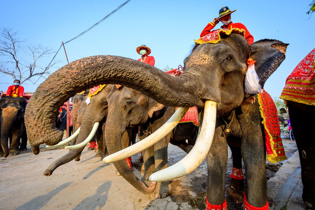 Mahouts ride their elephants dressed to commemorate National Elephant Day at the Elephant Royal Kraal Village in Ayutthaya on March 13, 2021. (Photo by Mladen Antonov/AFP Photo)
