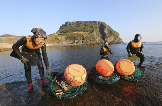 "South Korean Haenyeos come out from the water after catching turban shells and abalones while diving in Jeju, south of Seoul, South Korea, Friday, November 23, 2018. Known as Haenyeo, which literally translates as ""sea women"", they hold their breath up to two minutes as they pry abalone or gather seaweed from the ocean floor. (Photo by Ahn Young-joon/AP Photo)"