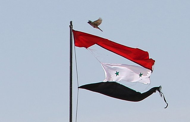 A bird flies near a torn Syrian national flag in the city of Qamishli, Syria April 21, 2016. (Photo by Rodi Said/Reuters)