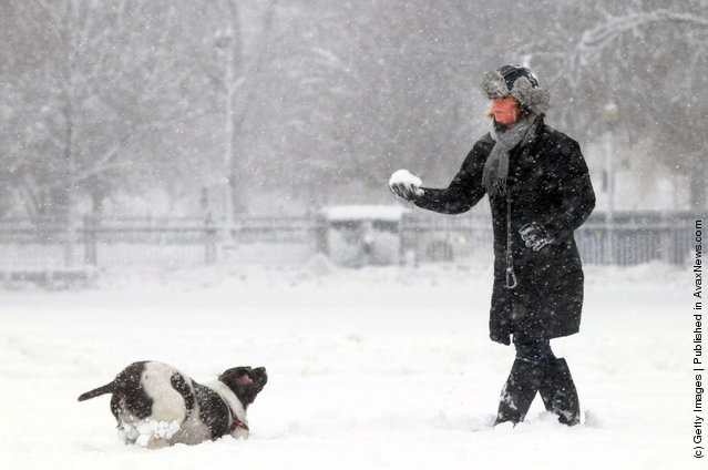 Elizabeth Laurence throws snowballs to her dog Pippa in Boston, Massachusetts