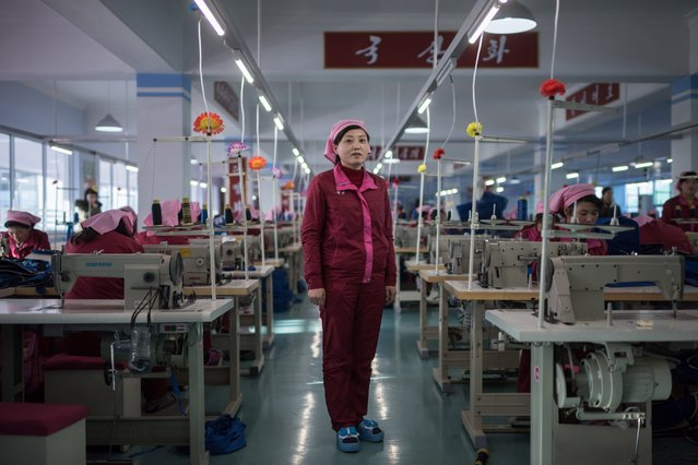 In this photo taken on February 18, 2017, Pak Song Hyang, 30, stands between sewing machines at a facility described to AFP as the 'Pyongyang Bag Factory' in Pyongyang. (Photo by Ed Jones/AFP Photo)