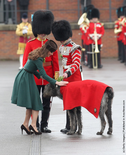 Catherine, Duchess of Cambridge presents a 'shamrock' to the Regimental mascot as she takes part in a St Patrick's Day parade as she visits Aldershot Barracks on St Patrick's Day on March 17, 2012 in Aldershot