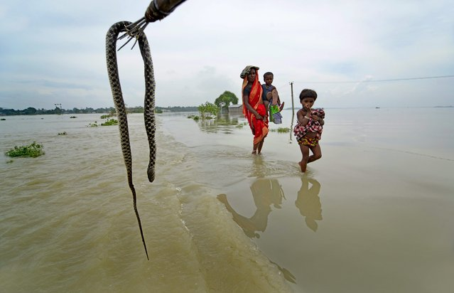 A mother walks her children through floodwaters as a man takes out a snake killed in flooding in Morigaon district of Assam state, India, 17 August 2014. At least 13 people were killed and 500,000 affected by swirling river waters in northern India after neighbouring Nepal released waters from its barrages following monsoon flooding, officials said. (Photo by EPA/STR)