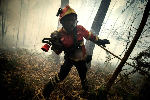 "A firefighter pulls a hose as he combats a wildfire in Bustelo, close to Barcelos, northern Portugal, on August 8, 2016. Portuguese meteorologists have advised that up to Wednesday nearly the entire north of the country was at a ""very high to maximum"" risk of forest fires. Forest fires, raging since Friday in northern Portugal, had redoubled in vigor late yesterday, mobilizing more than 3,000 men fighting against 160 fires, eight classified as ""important"". (Photo by Miguel Riopa/AFP Photo)"