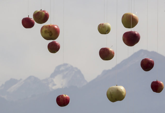 """Apples hanging from strings are seen with the Tien Shan mountains inn background during the Apple Festival at City Day celebrations in Almaty September 21, 2014. The name Almaty derives from the Kazakh word """"alma"""", which means """"apple"""". (Photo by Shamil Zhumatov/Reuters)"""