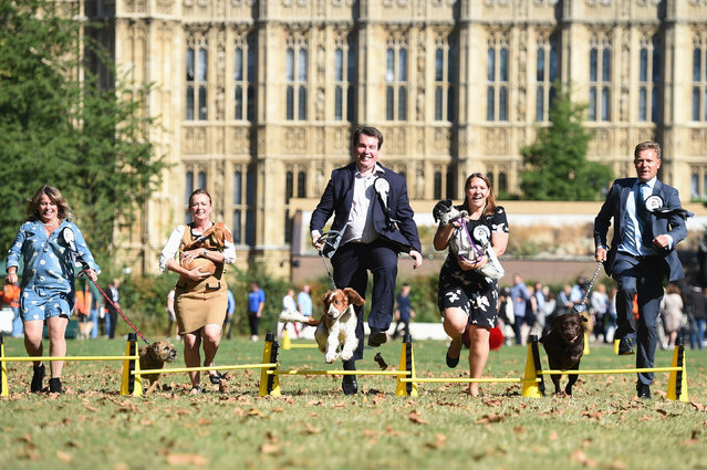 Members of Parliament (MP's) leap over hurdles with their pet dogs during the Westminster Dog of the Year in London, Britain, 08 September 2016. Members of the Parliament got together with their pets for the annual parliament dog show. (Photo by David Mirzoeff/PA Wire)
