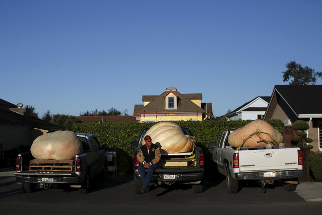 John Hawkley, of Napa, sits by his pumpkin in the back of his truck during the annual Safeway World Championship Pumpkin Weigh-Off in Half Moon Bay, California October 12, 2015. (Photo by Stephen Lam/Reuters)
